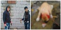 Yavru Köpeğin Kulağını Kesen Saldırganlar Gözaltında