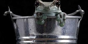Teknolojinin Kıymetini Hafife Alanlara: Bir Bardak Kurbağalı Süte Ne Dersiniz?