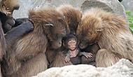 İnsanoğlunun Son Marifeti: Primat Türlerinin %60'ının Soyu Bizim Yüzümüzden Tükeniyor!