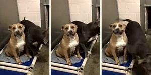 Barınağa Gelen İnsanların Kalplerini Kazanmak İçin Gülümsemeyi Öğrenen Köpek