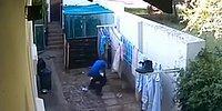 Hırsıza Beklemediği Bir Anda Sürpriz Yapan Köpekler