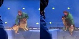 A Dog's Purpose Filminin Setinde Büyük Skandal!