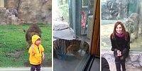 Kapatıldığı Kafesten Bunalıp Ziyaretçilere Saldırı Girişiminde Bulunan Hayvanlar