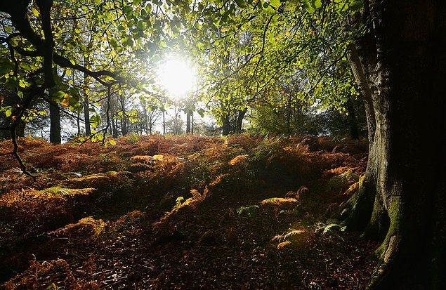 1. Ağaçlar özellikle kış mevsiminde, kendilerinde eksik olan maddeleri komşu ağaçlardan alabiliyor.