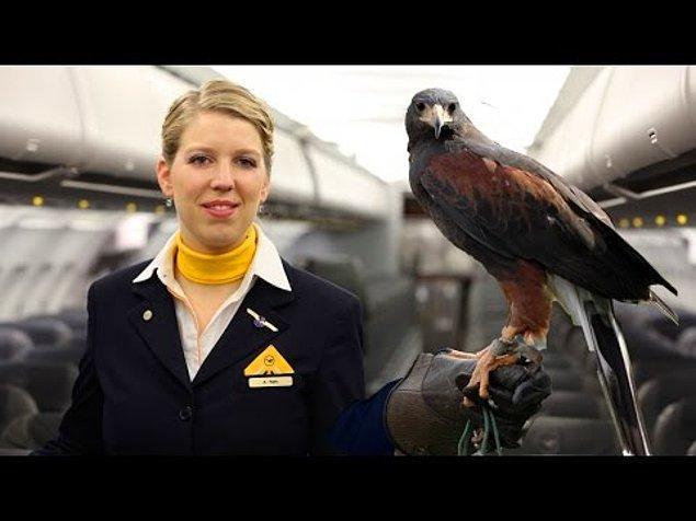 En kapsamlı hizmet ise Lufthansa'da! Falcon Master adında özel bir kuş taşıma tepsisi yolcuya sunuluyor.