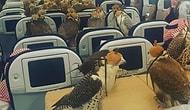 Yırtıcı Kuşlar Ekonomi Sınıfında! Arap Prens 80 Adet Şahini İçin Uçak Bileti Aldı