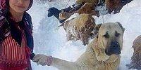 Anne Keçi ve Yavrusunu Sırtlayan Rizeli Hamdu Sena ve Köpeği Tomi'nin Hikâyesi