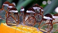 Mest Olmaya Hazırlanın! Büyük Hayranlıkla İzleyeceğiniz 21 Doğa Görüntüsü