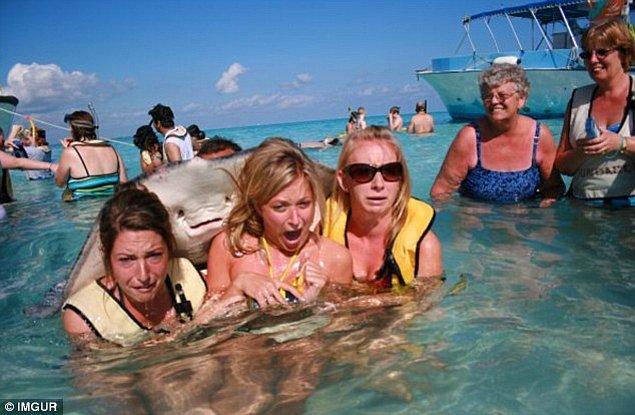 18. Belki de aralarındaki en meşhuru. Sarah Bourland, Natalie Zaysoff ve Kendall Harlanin Cayman Adaları'nda yaptıkları tatilde bir vatoz tarafından beklenmedik bir kucaklama aldıklarında.