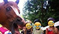 Trollük Konusunda En Az İnsanlar Kadar Hınzır Olmayı Beceren 19 Hayvan