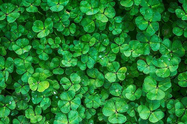 Sakin yeşil!