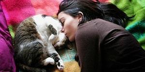 Siyamından Tekirine Her Kedi Sahibinin İllaki Yaşadığı 16 İlk Tecrübe