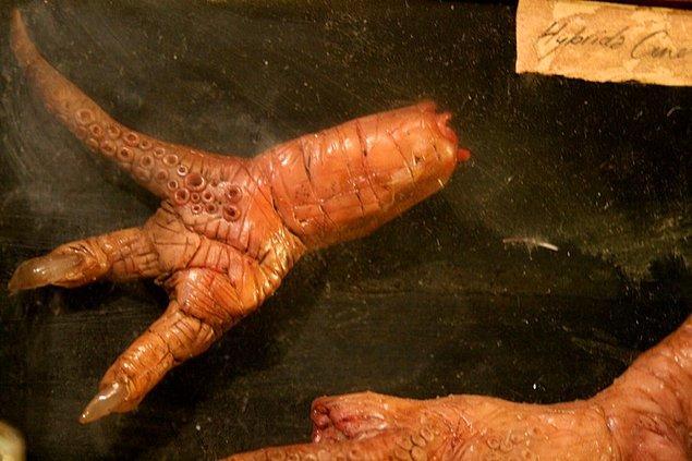 18. Bu da bu hibritleme işleminden sonra ortaya çıkan organlara daha yakından bir bakış