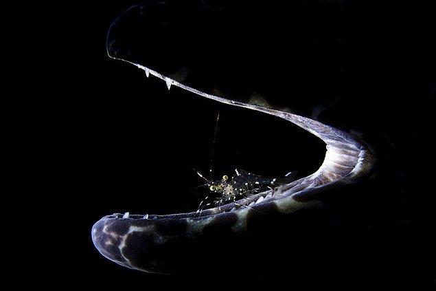 9. Yılan balığının üzerindeki karides.