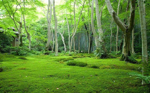 7. Dünya'nın en yüksek popülasyon yoğunluğuna sahip ülkelerinden biri olmasına rağmen Japonya, gelişmiş ülkeler içinde en yüksek ormanlık alana sahip ülke (%74). Bu ormanlar 400 yıldır sürdürülen bir politikanın ürünü.