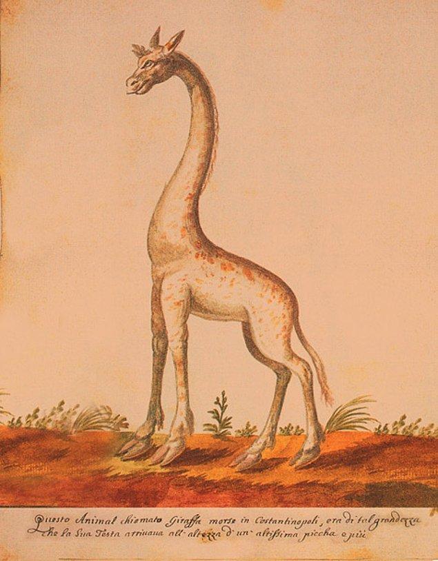 Padişahın emri üzerine zürafa Çiniliköşk Meydanına getirildi.