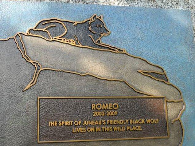 """""""Romeo 2003-2009. Juneau'nun arkadaş canlısı siyah kurtunun ruhu bu vahşi yerde yaşıyor. """""""