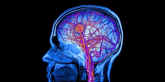 2. Beynin %73'ü sudur. Yalnızca %2'lik bir dehidrasyon (su kaybı) dikkatinizi, hafızanızı ve diğer bilişsel yeteneklerinizi kısıtlar.