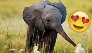 Bebek Fillerin Dünyanın En Tatlı ve Şirin Hayvanları Olduğunun 17 Sevimli Kanıtı