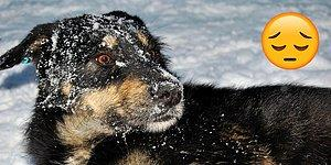 Dünya Bizden İbaret Değil! Hayvanlar Donarak Ölüyor, Görmezden Gelmeyin!