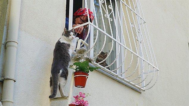 Bu kış Türkiye'yi çok ağır vurdu, özellikle sokak hayvanlarını. Bildiğiniz gibi onların bu soğuklarda barınacak pek bir yeri yok bu yüzden kocaman yürekli bir kadın onlara evine açılan bir merdiven kurdu.