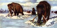 Dağ Gibi Hayvanlar Olan Tüylü Mamutların İç Sızlatan Yok Oluş Süreci Ortaya Çıkarıldı!