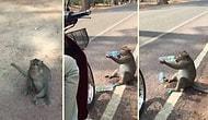 Yolun Kenarında Dilenci Gibi Bekleyip Verilen Suyu Kana Kana İçen Maymun
