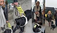 İnsanlık Ölmeyecek! Görme Engelli Kadının Rehber Köpeğiyle Metrobüse Binmesini Sağlayan Adam