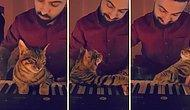 Dostunun Piyano Çalmasına Eşlik Edip Sevimliliğin Sınırlarını Zorlayan Minnoş Kedi