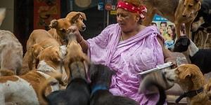 Hindistan'da 400 Sokak Köpeğinin Anası Olmaya Kendini Adamış Bir Kadının Hikayesi