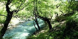 İklim Değişikliğinin Tehdit Ettiği Akdeniz Ormanlarından 9 Ağaç Türü