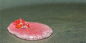 Şekerleme ve Çikolataların İnsanı Hipnotize Edici Erime Anlarını Bir de Tersten İzleyin!