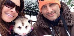 Onu Kurtaran Annesinin Yanından Hiç Ayrılmak İstemeyen Öksüz Opossum Opie ile Tanışın!