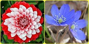 Baharda Açan Hangi Çiçek Senin Ruhunu Yansıtıyor?