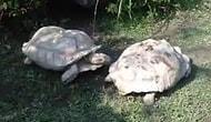 Dünya'yı değerli kılan dayanışma duygusu her canlının bir parçası:Kaplumbağa Daynışması