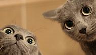Kedi Olsan İsmin Ne Olurdu?