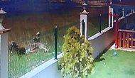 6 Köpeğin Saldırısına Uğrayan 5 Yaşındaki Talihsiz Çocuk