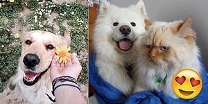 Mutluluğun Resmini Çizemedik Ama Fotoğraflarını Bulduk! Köpeklerin Gülümseten 23 Mutlu Anı