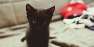 Boş Bir İnanışın Tarihi: Kara Kedilerin Neden Kötü Şans Getireceğini Düşünüyoruz?