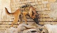 İnsanoğlunun İşkence Konusunda Sınırı Olmadığının Ürpertici Kanıtı: Canlı Bomba Hayvanlar
