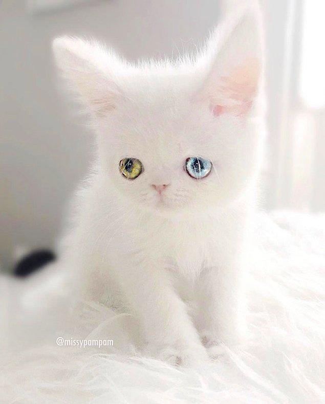 Dünya üzerindeki en büyüleyici gözlere sahip. 👀👀