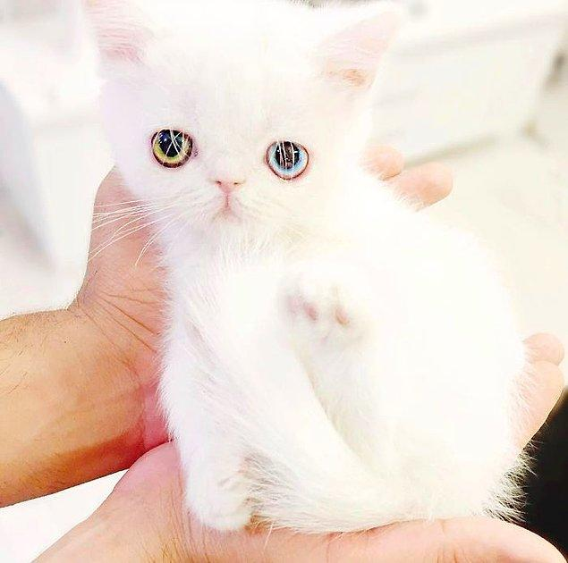 Gözlerinin bu şekilde olmasının sebebi 'heterokromi' adı verilen bir durum.