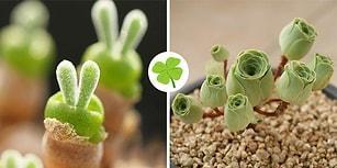 Botanik Sevenler Toplanın! Bir Görenin Hemen Evine Almak İsteyeceği Türden Dolgun Yapraklı Bitkiler
