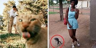 Kedilerin Yer Aldığı Her Fotoğrafta Şovu Çalıp Başrolü Kaptığını Gösteren 29 Fotoğraf