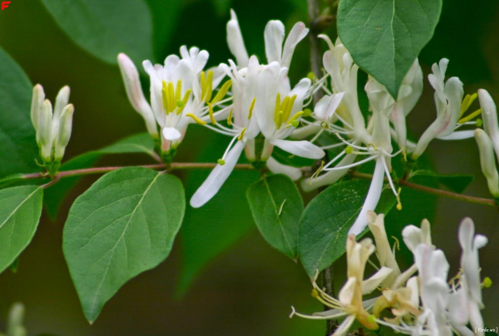 çiçekleri Saksılardan Sofralara Alıyoruz Faydalarına