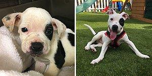 Bir Parkta Ölüme Terk Edilen, Diğerlerinden 'Farklı' Köpeğin İçinizi Isıtacak Hayata Tutunma Hikayesi