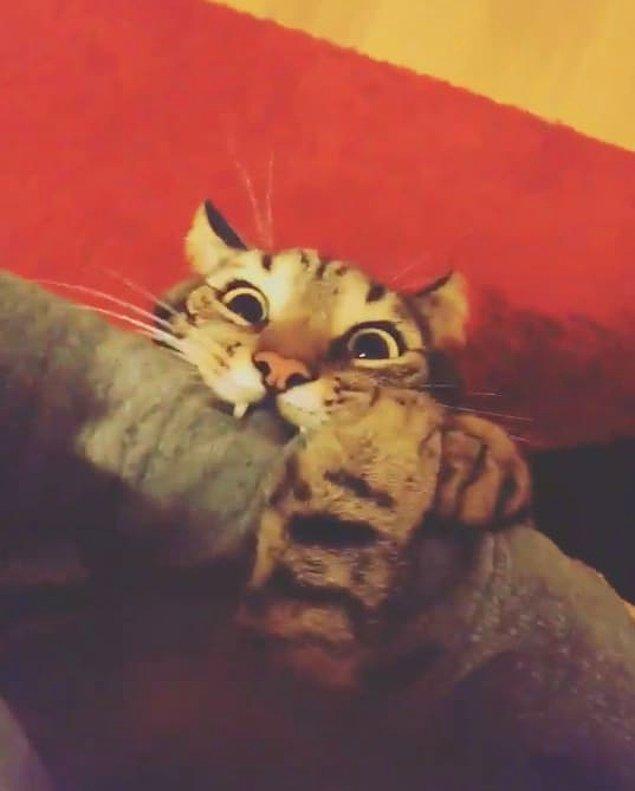 7. Kedinizin sabah 5'te yapmaktan hoşlandığı bir diğer aktivite ise evde fink atıp rastgele objelere saldırmaktır.