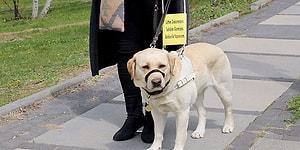 Görme Engelli Bireylerin Bağımsız Bir Hayat Sürmesi İçin Fark Yaratıyorlar: Rehber Köpekler Derneği