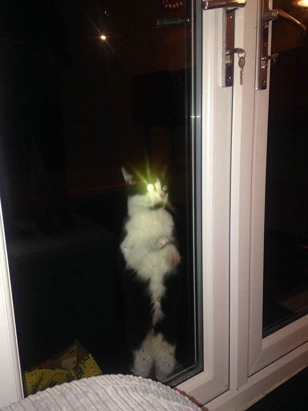 14. Ne zaman kedinizin dışarı çıkmasına izin verirsiniz, o zaman geri içeri girmek ister.