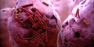 Farklı Türden Binlerce Bakteri Barındıran, Vücudumuzun En Pis Noktasını Biliyor musunuz?